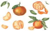 Set of mandarines with slices and leaves. Botanical illustration. Can be used for labels, menu, scrapbooking, prints, textile and other. Isolated on white background. - 231976775
