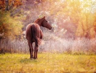 Beautiful red horse on the background of fabulous autumn foliage