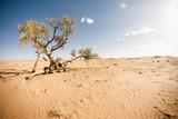 sahara desert - 231982162
