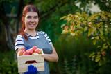Photo of happy brunette gardener with harvest of apples in wooden box in garden - 231984134