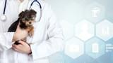 Small cute dog examined at the veterinary doctor, close-up © BillionPhotos.com