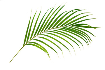 Green palm leaf isolated on white background © Suraphol