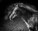 horse portrait - 232016930