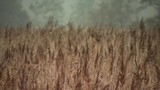 Focus pull of long grass reeds on a cloudy day - 232037707