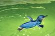 Leinwandbild Motiv penguine in the water