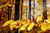 Herbstwald im Chiemgau - Bayern - 232072719