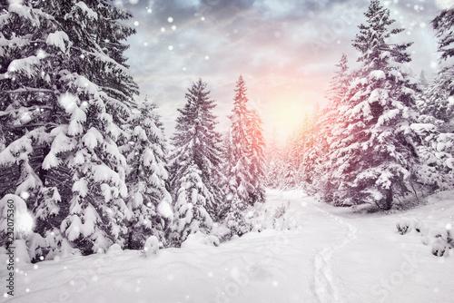 Leinwandbild Motiv winterurlaub - schnee im wald