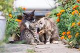 tenderness scene, cats - 232080122