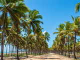 beach tropical forest with coconut palm trees - 232086521