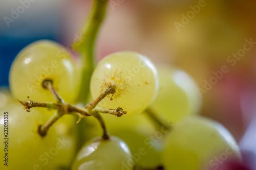 Foto Murales bunch of green grapes