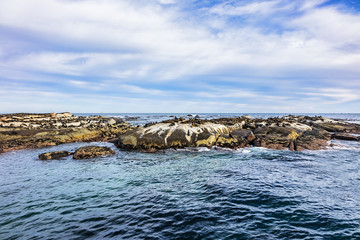 View of Duiker Island or Duikereiland (Afrikaans), also known as Seal Island in Hout Bay near Cape Town. Wild seals colony on Seal Island. South Africa.  © dbrnjhrj