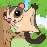 Australia sugar glider cartoon, cartoon cute, animal cute