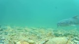 a shot of fish swimming under the water - 232108139