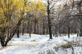 landscape of urban park covered with first snow - 232109331