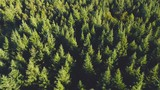 Aerial drone shot over the north european forest. Shot in 4K (UHD). - 232121157