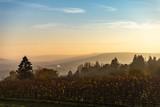 Vue sur les vignes d'un paysage de campagne en Moselle - 232127918