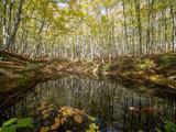 美人林の秋 - 232134794