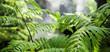 Leinwandbild Motiv Closeup wild green fern leaves in tropical waterfall rainforest nature background