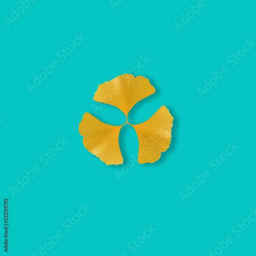 Yellow ginkgo leaf on pastel blue background, minimal concept, Autumn background © kritiya