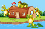 Turtle at the wooden house - 232145724
