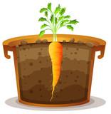 Carrot in pot half view - 232146102