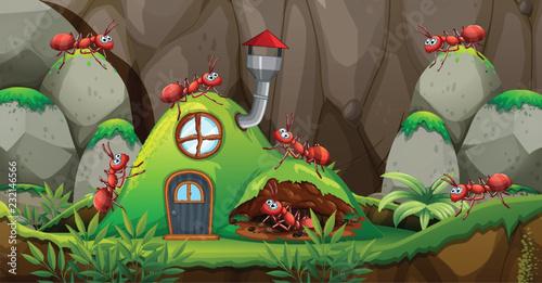 Każdy dom w naturze