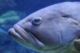 tête poisson - 232148511