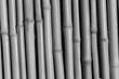 Bamboo BW