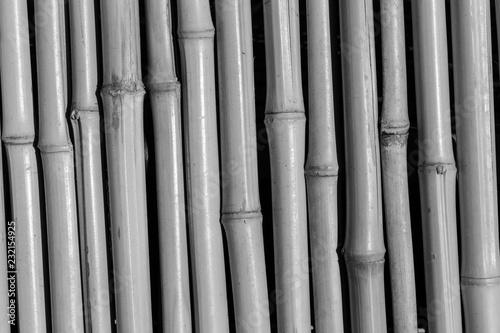 Bamboo BW - 232154925