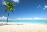 palm and beach - 232160971