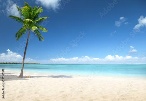 Foto Murales palm and beach