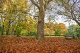 Park in the early fall with the big tree - 232161151