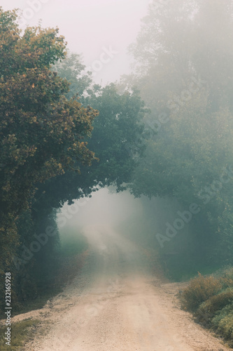 Foggy morning, autumn landscape with trees and dirt road