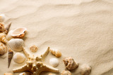 top view of sandy beach with seashells and starfish - 232188332