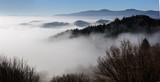 Mountain ridge with clouds flowing through the pine trees. Foggy Landscape. - 232190357