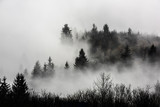 Mountain ridge with clouds flowing through the pine trees. Foggy Landscape. - 232190539