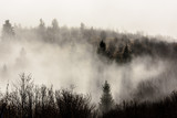 Mountain ridge with clouds flowing through the pine trees. Foggy Landscape. - 232190575