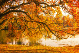 Tree by the lake during autumn in Lednice Park, Czech Republic - 232191357