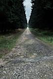Empty path in dark forest. - 232193999