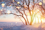 Frosty trees and snowflakes illuminated by sun