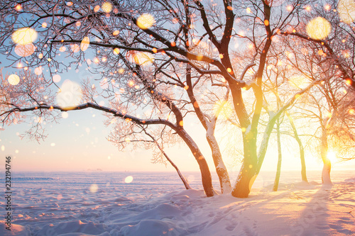 Wall mural Frosty trees and snowflakes illuminated by sun