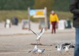 Möwen am Ostseestrand