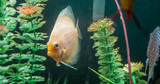 Fish - 232201310