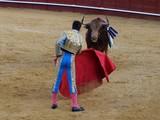 torero toro  - 232204508