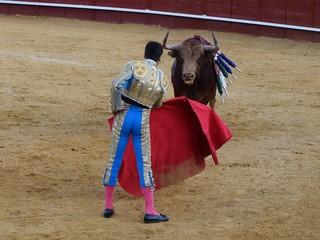torero toro