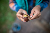 Top view of a child peeling a shell of roasted chestnut - 232205193