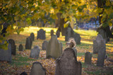 A squirrel eating a nut on a gravestone in a cemetery - 232206350