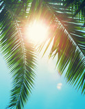 Coconut tree on the sky background - 232209595