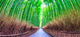 Bamboo forest  at Kyoto  landmark of Japan © Photo Gallery