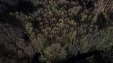 krajobraz las drzewa natura jesień krajobraz pola łąki  - 232219944